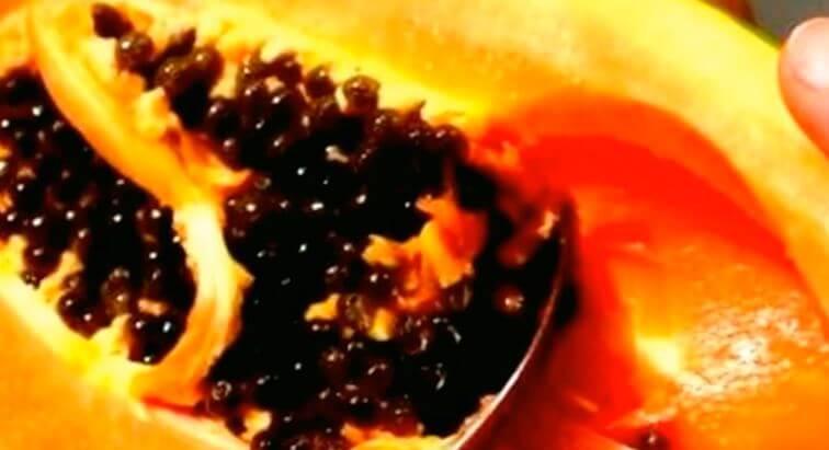 semena papayi Папайя на подоконнике