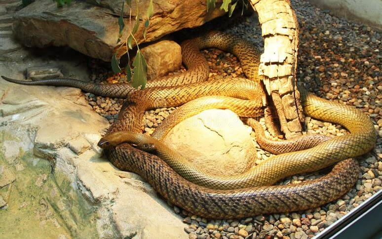 Жестокая змея фото