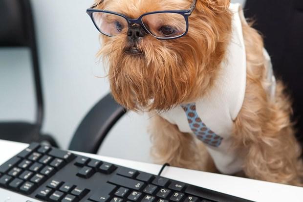 sobaka v ofise Как выбрать собаку для работы в офисе