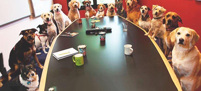 Собаки за столом