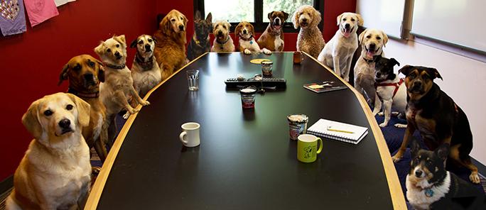 sobaki za stolom Как выбрать собаку для работы в офисе