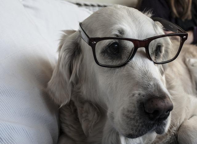 Умный пес