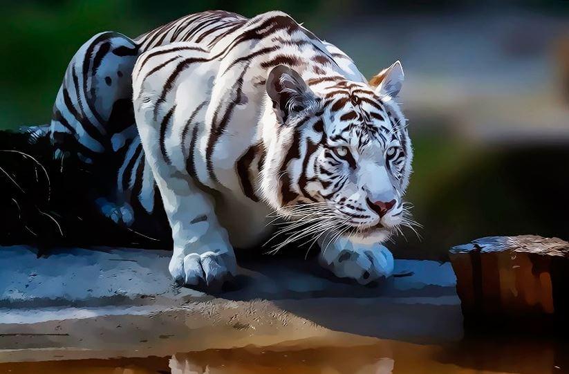 Белый тигр атакует