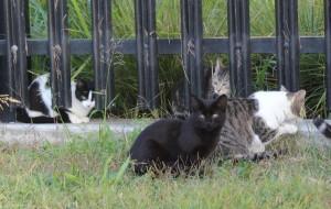 koty v sadu 300x190 На Аляске обяжут сажать котов на цепь