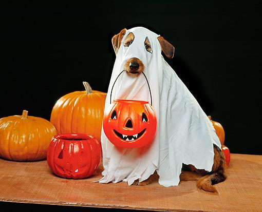 Пес в костюме привидения