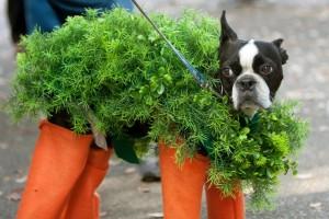 Собака в костюме морковки