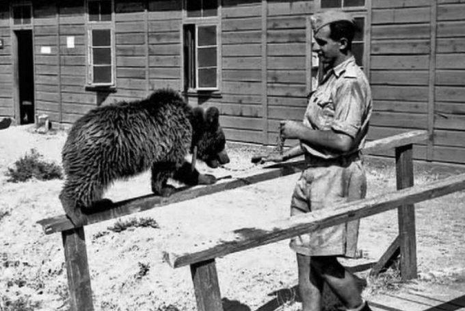 medved-voytek