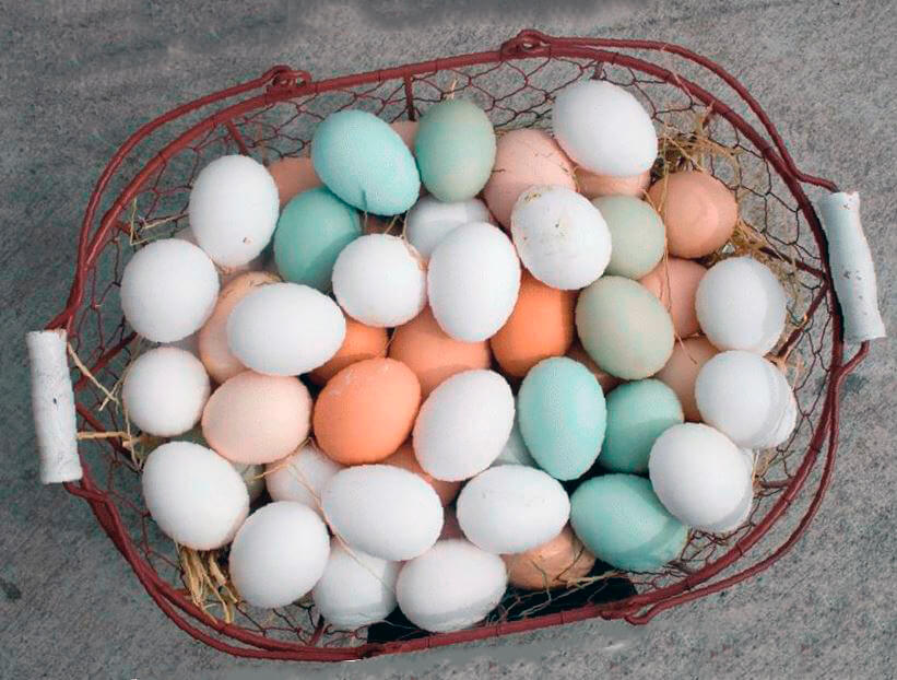 Яйца араукана