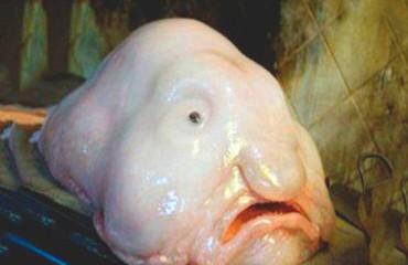 Рыба-капля