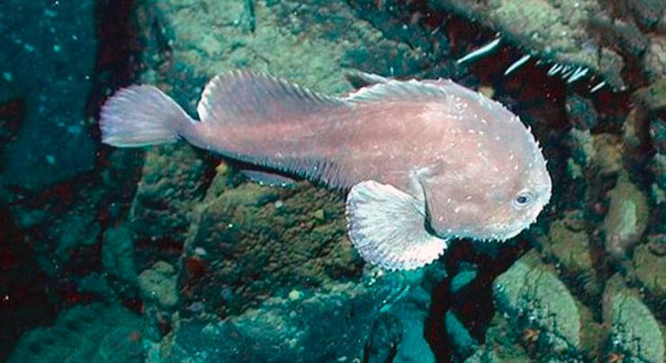Плывущая рыба-капля