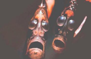 Рыбы-топорики