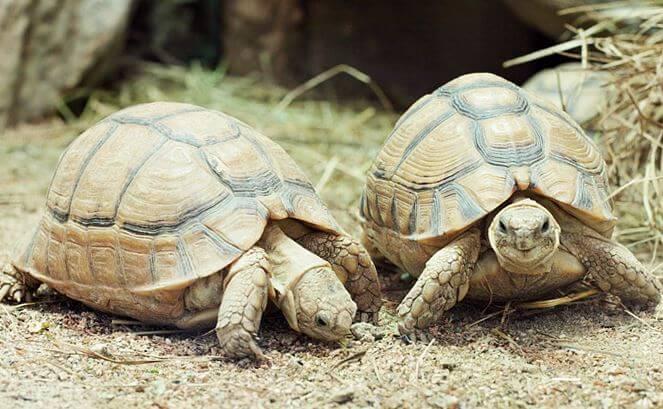 Путешествие египетские черепах