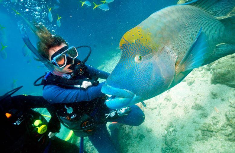 Драйвер с рыбой-наполеон