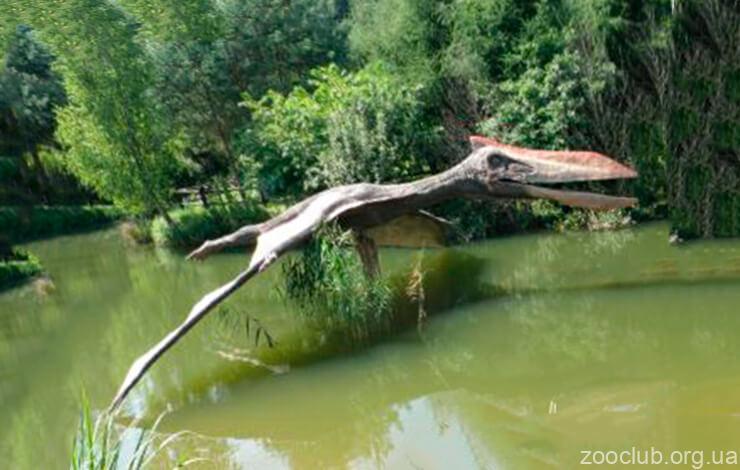 Фото Quetzalcoatlus northropi