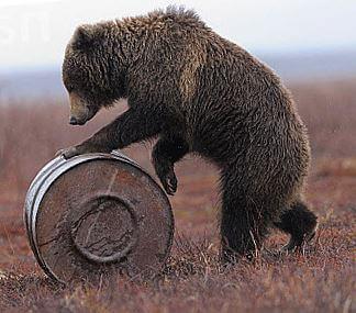 kamchatskiy buryy medved s bochkoy Камчатский бурый медведь