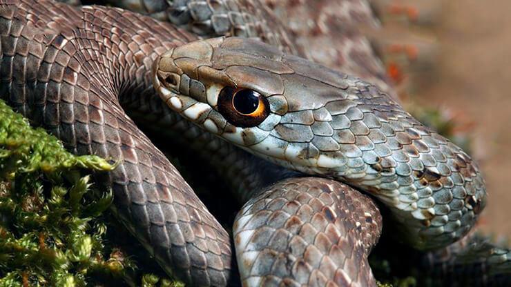 Картинка с ящеричной змеёй