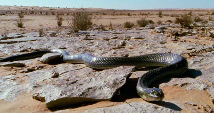 Фото ящеричной змеи