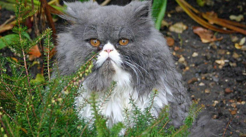 Игнорирование котоа после укуса фото