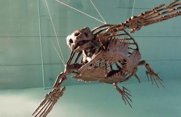 Архелон, или самая большая черепаха