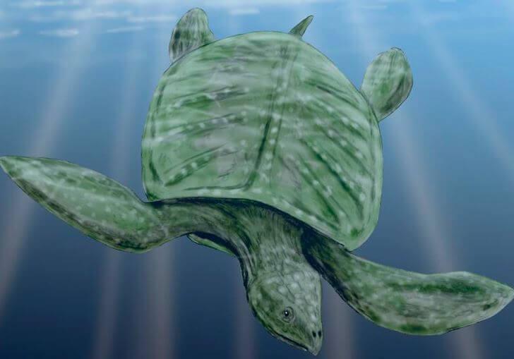 Archelon ischyros под водой