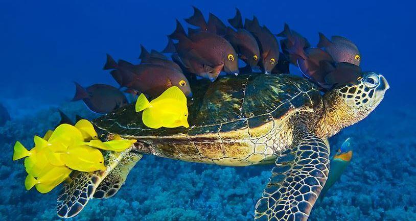 Черепаха с рыбками