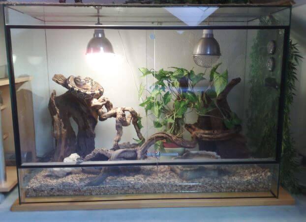 terarium dlya leopardovyh cherepah Леопардовая черепаха