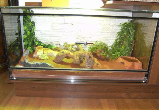 terrarium dlya poloza Содержание маисового полоза в террариуме