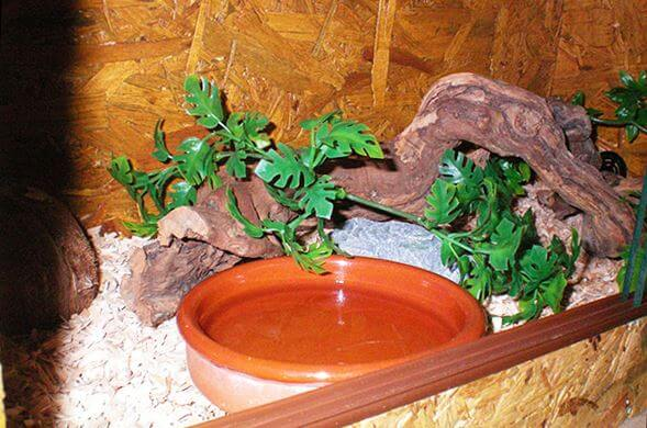 terrarium s bolshoy poilkoy Содержание маисового полоза в террариуме