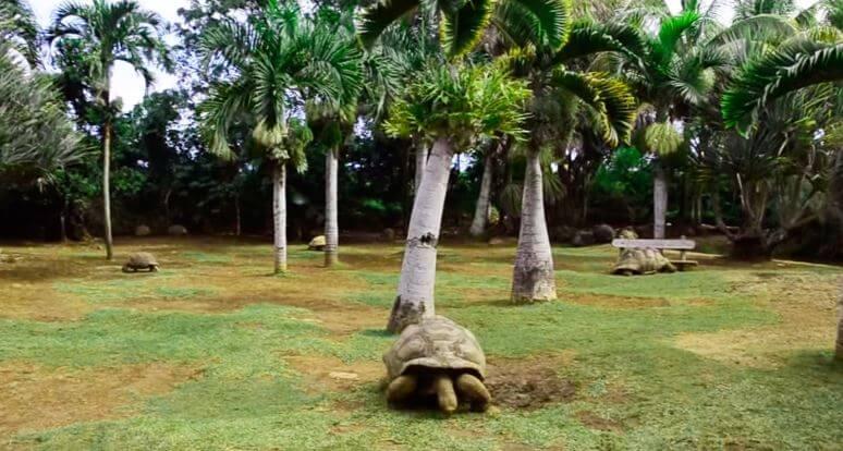Альдабрская гигантская черепаха фото