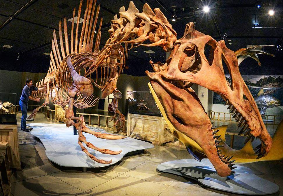 Скилет Spinosaurus
