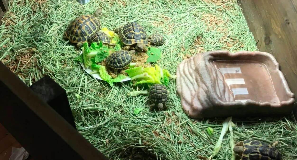 Вольер для среднеазиатской черепахи