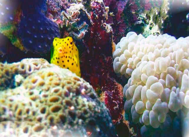 Путешествие кузовка-кубика по морскому рифу