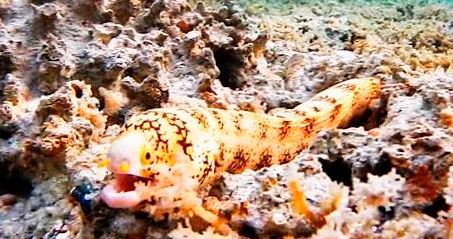 аквариум с муреной-ехидной звездчатой