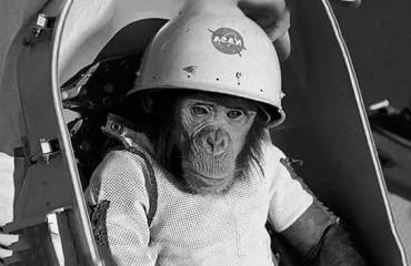 Шимпанзе в космосе