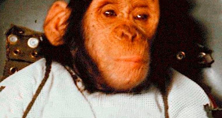 Тренировка шимпанзе Хэма