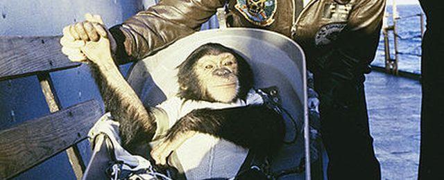 шимпанзе Энос после приземления