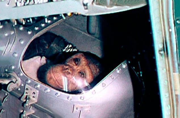 Шимпанзе в космосе фото