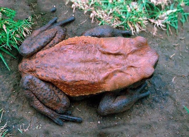 Картинка с жабой Бломберга
