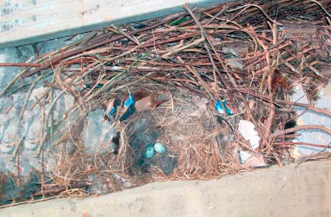 Галкино гнездо
