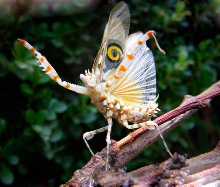 Изображение африканского колючего богомола