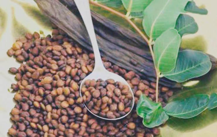 Семена рожкового дерева