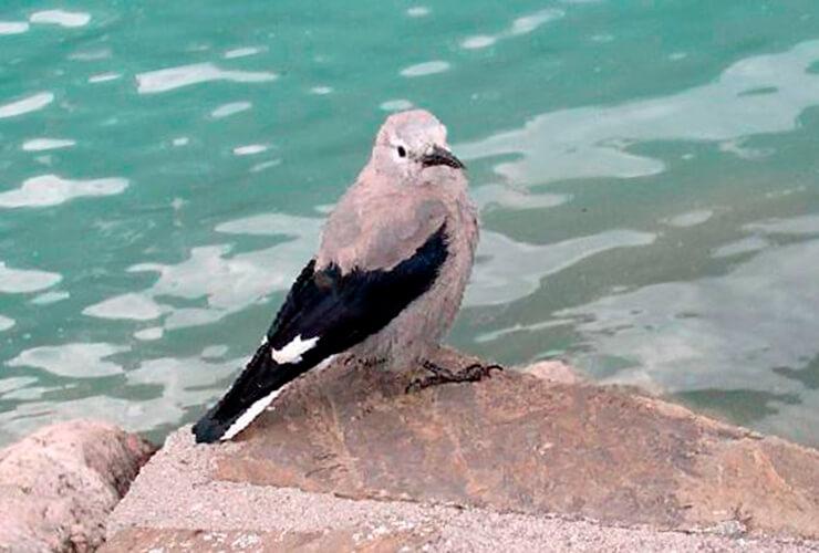 Североамериканская ореховка на берегу моря