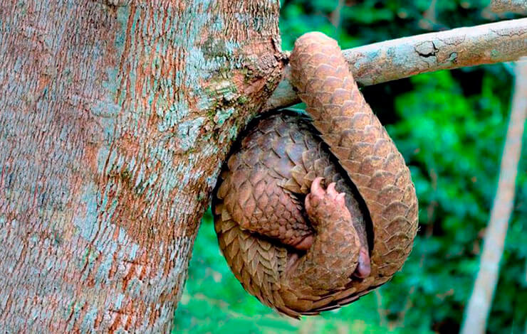 Степной ящер на дереве