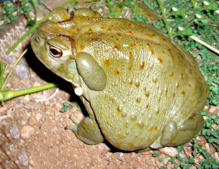 Скала с колорадской жабой