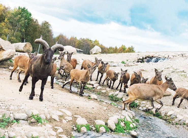 Картинка с дагестанским туром