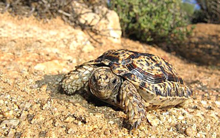 Фото самой маленькой черепахи