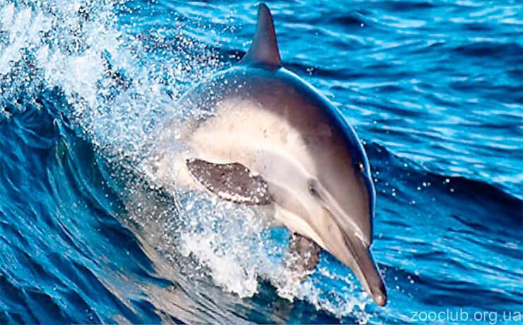 образ жизни дельфинов
