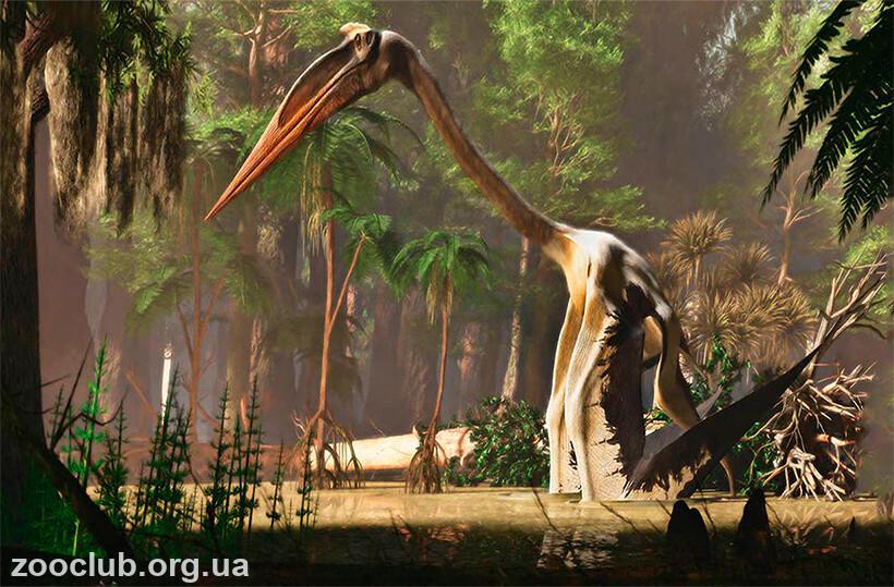Quetzalcoatlus northrop