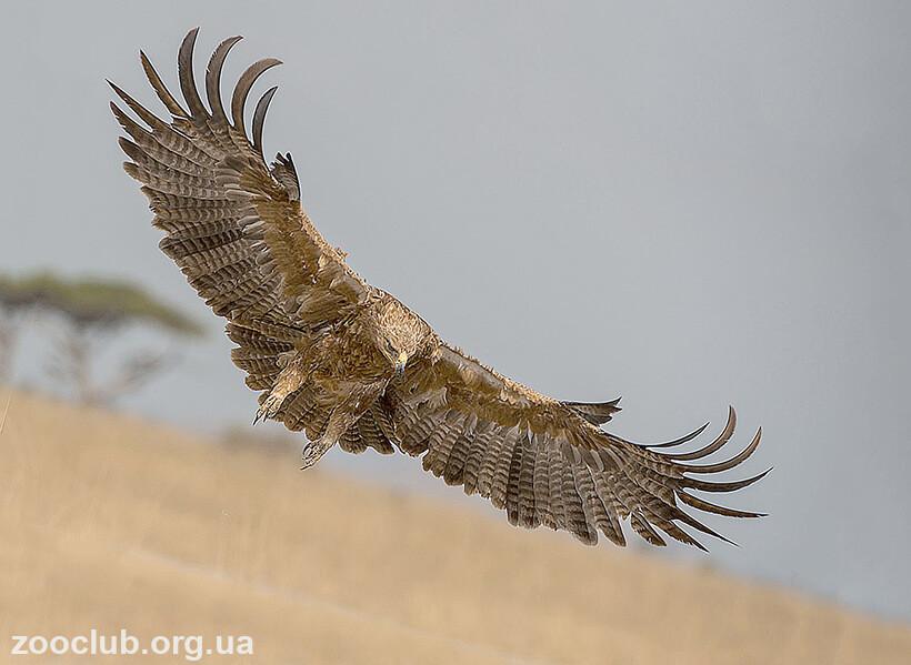 Каменный орел фото