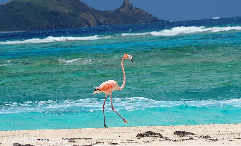 красный фламинго фото